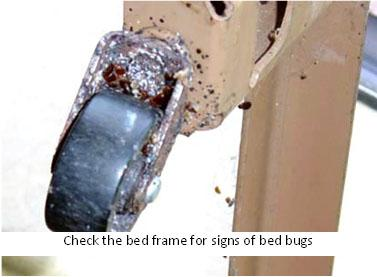 Check all sides of the bed frame for bed bugs