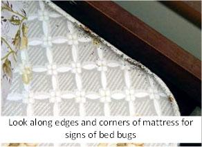 mattress showing evidence of a bed bug infestation