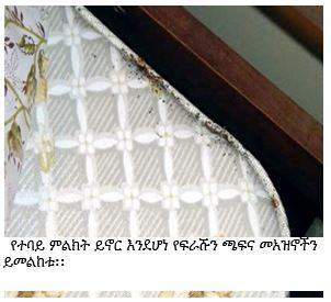mattress showing bed bug fecal matter with a caption in Amharic