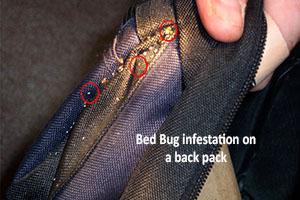blue and black backpack with a bed bug infestation