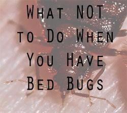 Home Visitors Let S Beat The Bed Bug